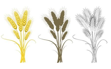 wheat crop: Ramo de trigo aislado en blanco