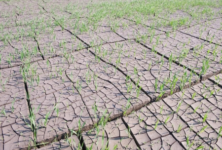 evaporate: Cracked land with grass Stock Photo
