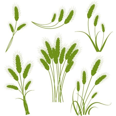 Spikes granen - het concept van de landbouw Vector Illustratie