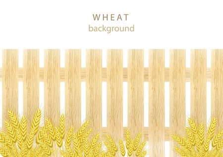 Wheat background with wooden fence Vector