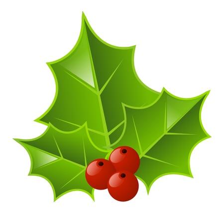 ilex aquifolium holly: Christmas holly isolated on white