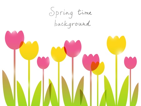 tulips isolated on white background: Spring background with place for text