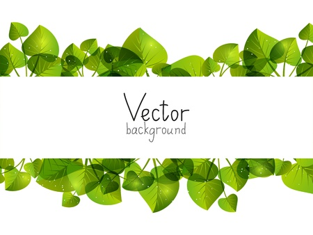 Green leaves background with place for text photo