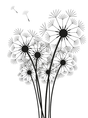 Dandelions silhouette isolated on white
