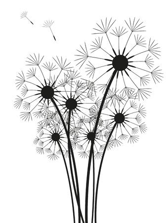 blowing dandelion: Denti di leone silhouette isolato su bianco Vettoriali