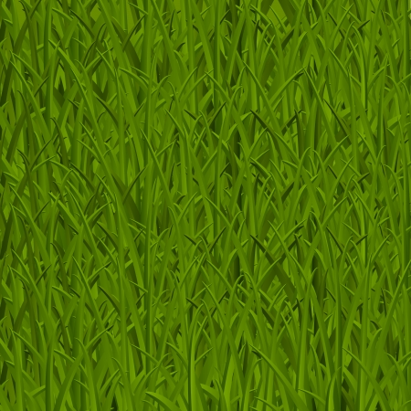 Green grass texture - vector illustration Vector