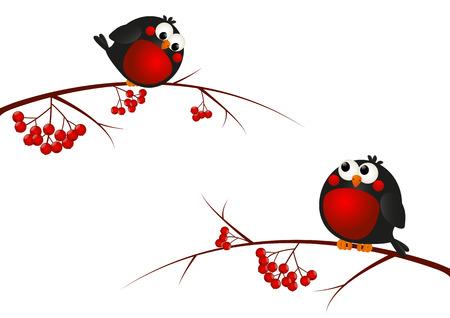 robin: Cute bullfinches on a rowan branches