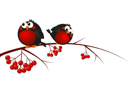Cute bullfinches on a rowan branch Vector