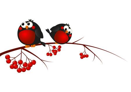christmas robin: Cute bullfinches on a rowan branch