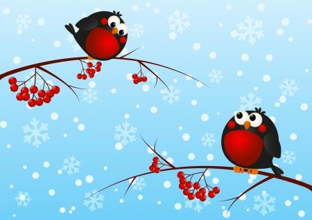 christmas robin: Cute bullfinches on a rowan branches
