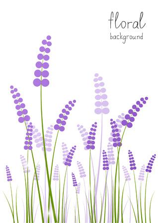 fiori di lavanda: Fiori di lavanda su sfondo bianco
