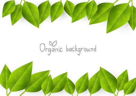 organic background: Organic background with green leaves