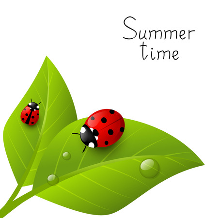 Red ladybugs on green leaves Vector