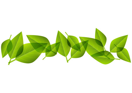 green leaves border:  Green leaves border for Your design Illustration