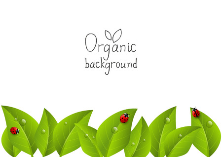 organic background: Organic background with place for text