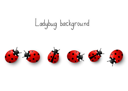 ladybird: Ladybug border for Your design