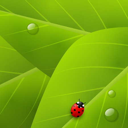 organic background: Green organic background for Your design Illustration