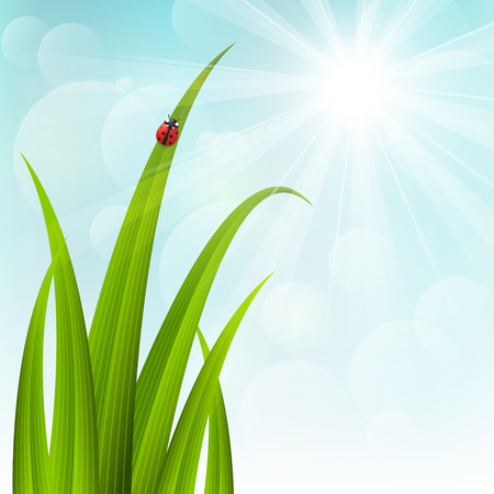 Spring grass on sunny background Stock Vector - 26366629