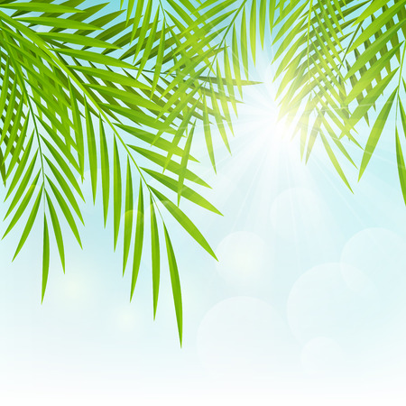 Palm leaves on sunny background Vector