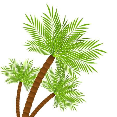 three palm trees: Three palm trees on white Illustration