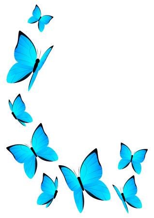 blue butterfly: Blue butterflies for Your design