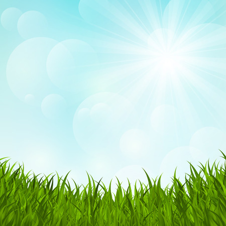 Green grass on sunny background Vector