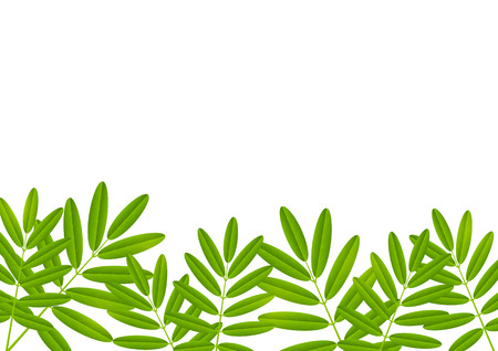 green leaves border: Green leaves border for Your design