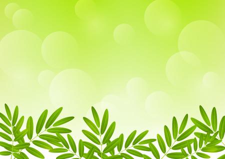Vogelbeere: Rowan Blätter auf grünem Hintergrund Illustration