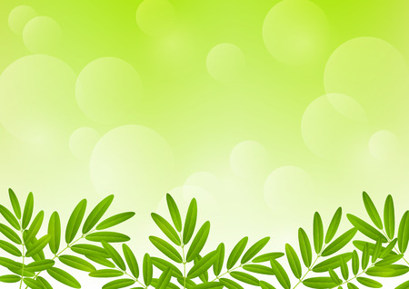 rowan: Rowan leaves on green background Illustration