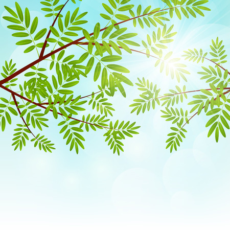 Vogelbeere: Rowan Tree Zweige auf sonnigen Hintergrund
