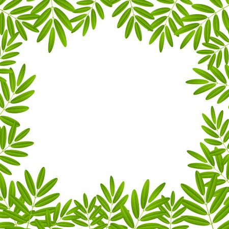 rowan tree: Green leaves frame for Your design