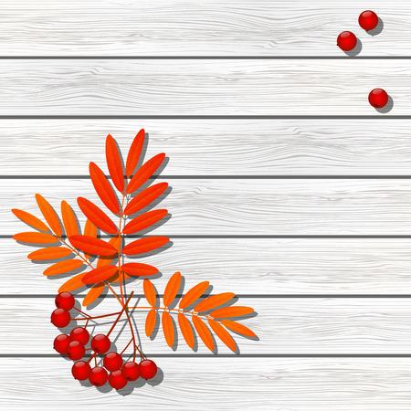 Vogelbeere: Rowan Beeren auf Holzuntergrund Illustration