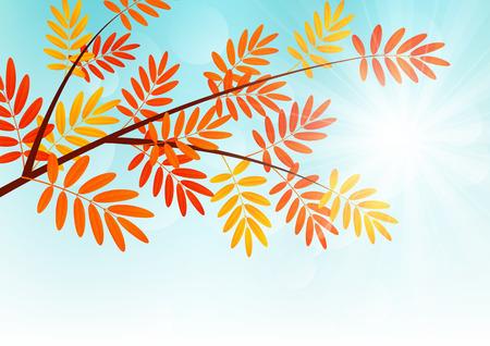 rowan: Autumn rowan branch on sunny background Illustration