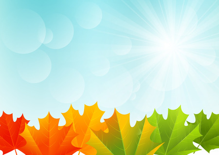 fall leaves background: Autumn maple leaves on sunny background