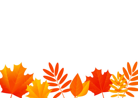 fall leaves on white: Autumn leaves border for Your design