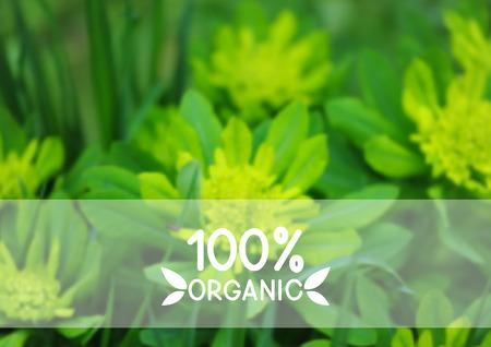 fondo natural: Natural de fondo verde para su dise�o Vectores