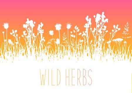 Wild herbs white silhouettes border - vector background for natural summer design Ilustração