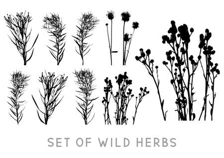 Set of wild herbs silhouettes isolated on white background - vector objects for natural summer design