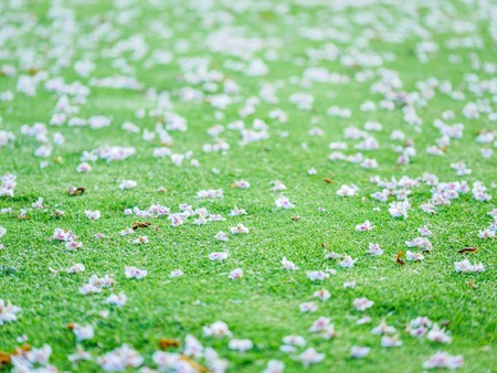 Close-up on blossoms on putting green. Blurry concept. Series Stock Photo