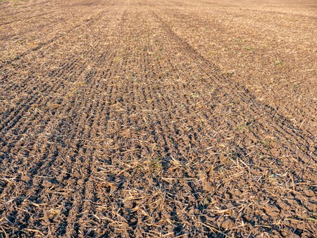 Image of dry brown farmland field after harvest