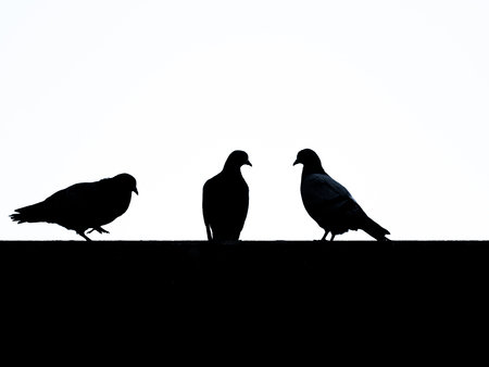 Image of silhouettes from doves with white background Stock Photo