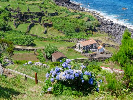 Image of beautiful blooming hydrangea in the nature of Azores Portufal Europe with stone house near the cost and sea in the background. paradise. holidays 版權商用圖片