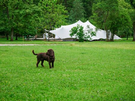 Image of whelp in front of a big white wedding tent
