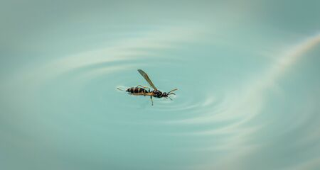 Macro of wasp in pool truggling not to drown Stock fotó
