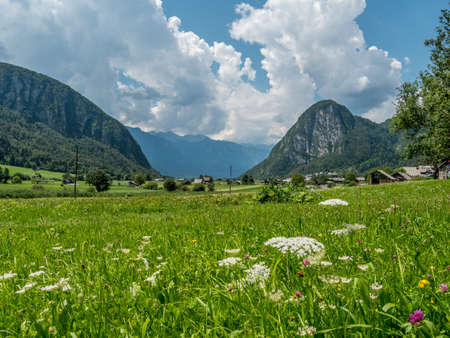Alpine landscape with green meadow, flowers and cloudy sky around slovenian mountains