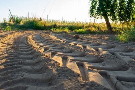 Tractor tracks in sand with selective focus and hop field in background