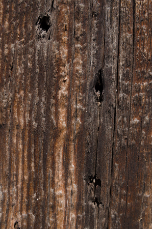 porosity: Board with a wooden texture with holes from nails of brown color