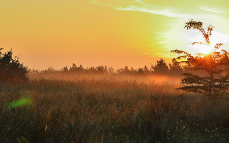Meadow in the fog, dawn, red sun and sky. Grass and trees
