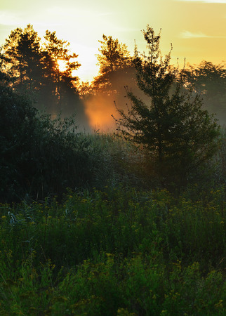 Spruce in the middle of a meadow, morning light. Grass, trees, dawn Stock Photo