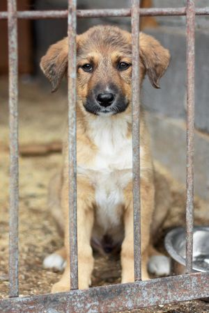 dog kennel: Puppy in a chage at the animal shelter waiting to be adopted Stock Photo